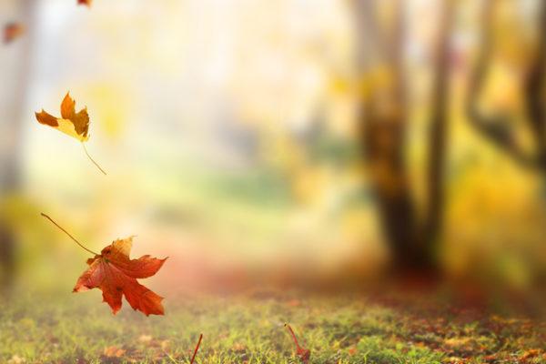 [News] 秋季脫髮嚴重?這幾招你一定要試試